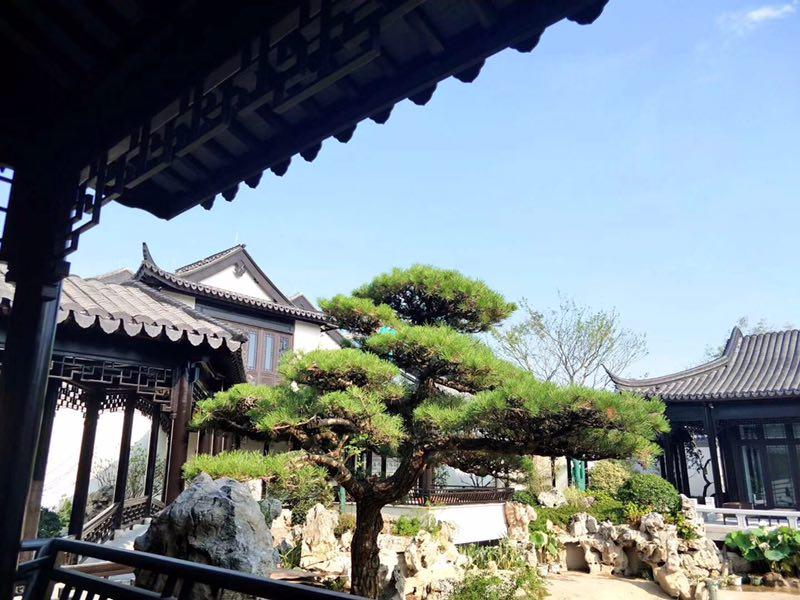 义乌绿城·桃花源-07
